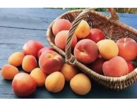 Корисні властивості персика та абрикоса фото