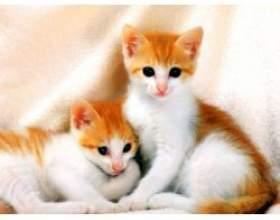 Поведінка домашніх кішок фото