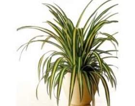 Найкорисніше кімнатна рослина фото