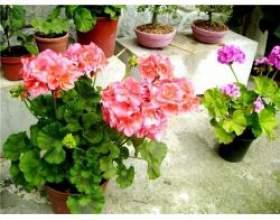 Найкорисніші кімнатні рослини фото