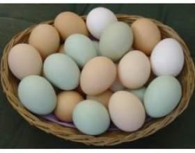 Найкорисніші відомості про курячі яйця фото