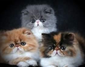 Скільки живуть коти або як дізнатися котячий вік фото