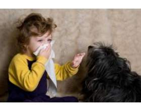 Собаки, які викликають алергію у дитини фото
