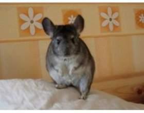 Зміст домашніх тварин в житлових приміщеннях фото