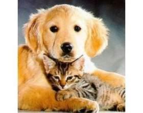 Чи варто заводити кішку, якщо в будинку вже є собака фото