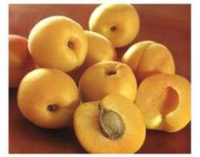 Властивості і застосування масла абрикоса фото