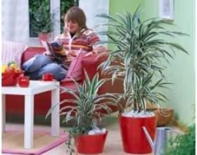 Чудова сімка найбільш невибагливих кімнатних рослин фото