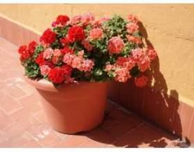 Види декоративних рослин фото
