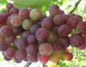 Виноград і його користь для шкіри фото
