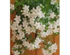 Кучеряві кімнатні рослини фото