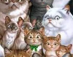 Всі коти потрапляють в рай! фото